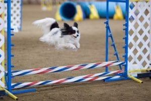 True agility trumps customer experience – here's why